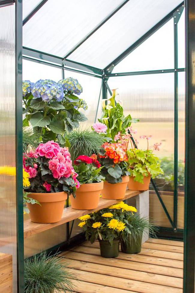 Greenhouse for Your Plants 3